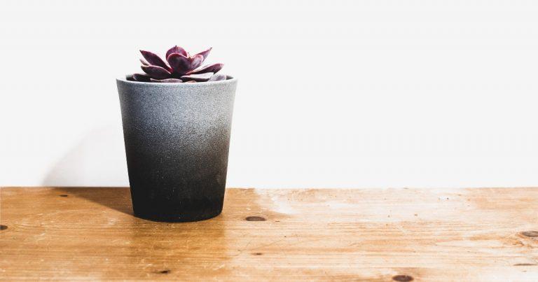 Evelyn Tribole: Principle Blog 2